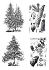 Retro vintage silhouettes of a European pine trees.