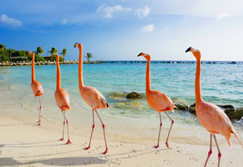 Tuinposter Flamingo Flamingo on the beach, Aruba island