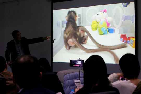 Pictures of Cloned monkeys Zhong Zhong and Hua Hua are seen at a press conference at the Institute of Neuroscience of Chinese Academy of Sciences in Shanghai