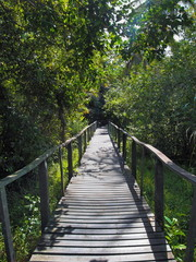 Footbridge in the jungle of Cahuita national park, Caribbean, Costa Rica