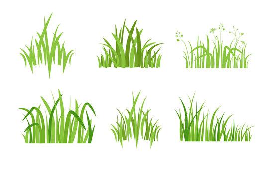 Set Eco green grass icon