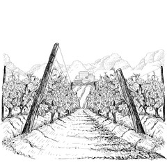 Vineyard landscape with clouds and building on the hill. Hand drawn sketch vector illustration on white