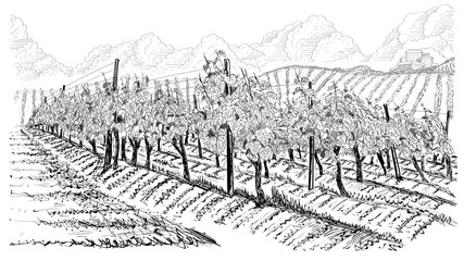 Vineyard landscape with mountines and building on the hill. Hand drawn sketch vector illustration on white