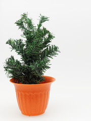 Artificial pine tree in orange plastic plant pot with dotted and stripped isolated on white background