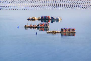 Fishing Hatchery, Chiloe, Chile