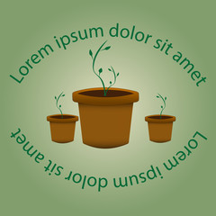 green sprout in a pot, sprouts, strength of nature