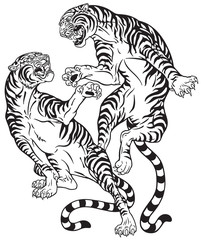 tigers fighting . Two roaring big cats in the battle . Black and white tattoo style vector illustration