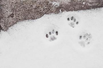 cat paw prints