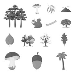 Forest and nature monochrome icons in set collection for design. Forest life vector symbol stock web illustration.