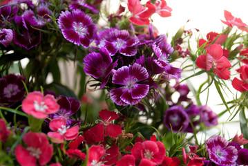 Fiori misti viola, rosa e rossi