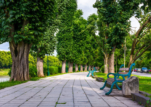 benches on Kiev embankment in Uzhgorod. lovely chestnut alley in summertime