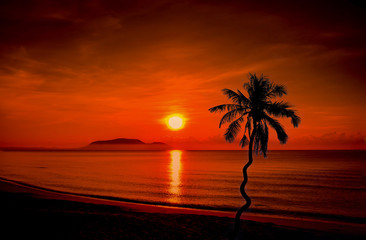 Landscapes of Silhouette coconut palm trees on beach at sunset.