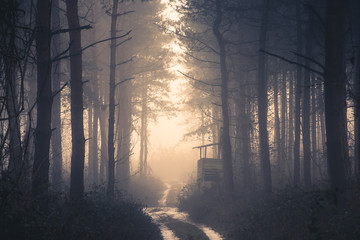 Sunset in deep foggy winter forest