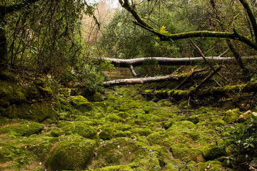 Rio de Mouros, Condeixa-a-Velha, Portugal, Europe This river dries in summer and reborn in winter, but this year because of the dry still has no water