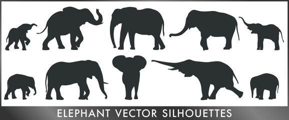 Elephant vector silhouettes Wall mural