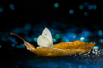 White butterfly on autumn leaf with colorful lights and bokeh on black background