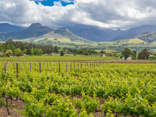Wine region - Franschhoek - Vineyards with dramatic mountains and sky in background around Franschhoek