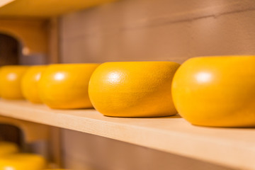 Traditional process of making Dutch cheese Gouda