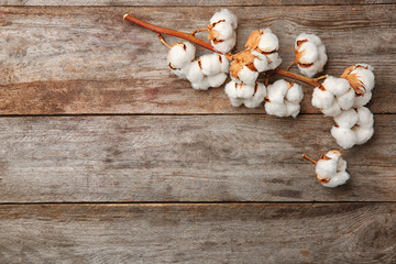 Cotton flowers on wooden background