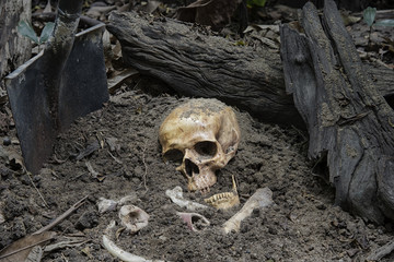 Skulls and skeletons bones were unearthed from the graves by shovels in the horrible cemetery. Still life and art image.