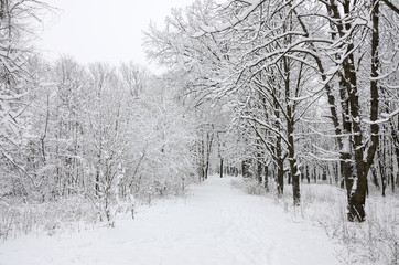 Winter landscape in a snow-covered park after a heavy wet snowfall. A thick layer of snow lies on the branches of trees