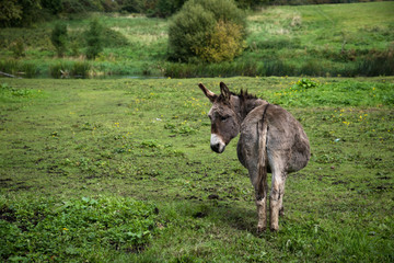 Donkey resting on green field