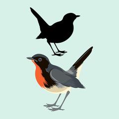 Firethroat  bird vector illustration flat style black silhouette