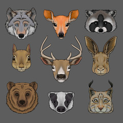 Head of wild animals set, portrait of wolf, doe, raccoon, squirrel, deer, hare, bear, badger and lynx hand drawn vector Illustrations