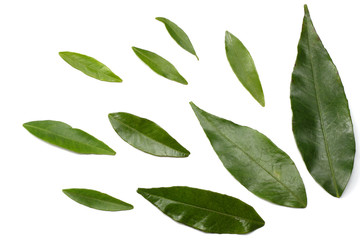 citrus leaves isolated on white background top view