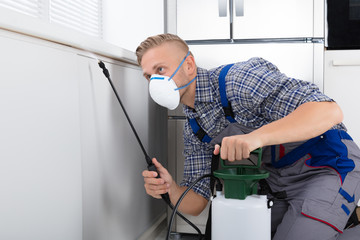 Worker Spraying Pesticide On Wall
