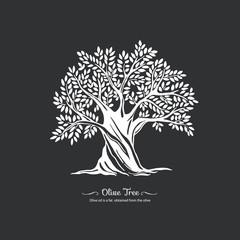 Olive tree. Nature. Vector silhouette illustration Organic food