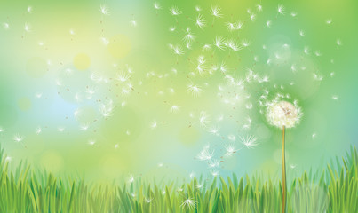 Vector spring  nature  background,  dandelion on green  bokeh background.