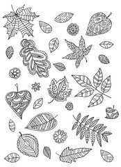Set of leaves in the doodle style.