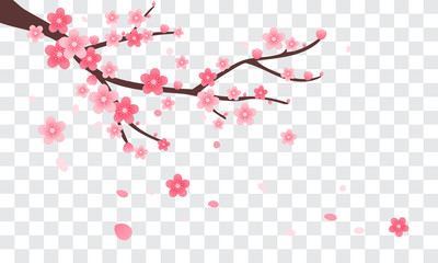 Sakura branch with falling petals Vector illustration. Pink Cherry blossom on transparent background.