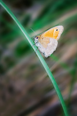 A beautiful orange butterfly sits on the stem of the plant. Macro. Blurred background of nature