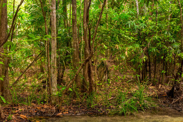 thick thickets in the jungles of Krabi in Thailand in a good season