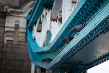 Detail of the tower bridge, with two pigeons looking down from blue cables. London.