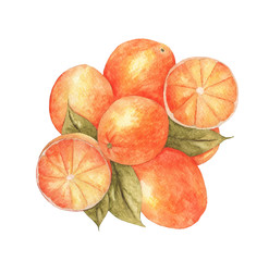 Group of oranges with leaves isolated on the white background. Hand drawn watercolor fruits illustrations