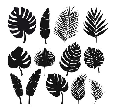 Set of black silhouettes of tropical leaves palms, trees.