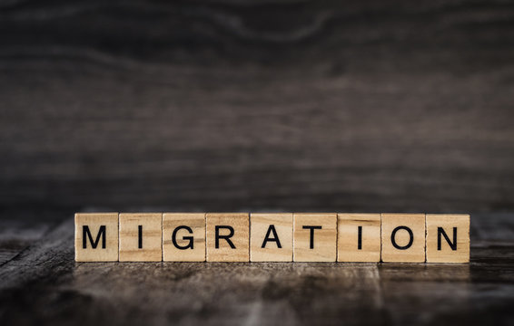 the word migration is made of bright wood cubes with black letters on a dark wooden background