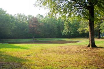 Pond in field