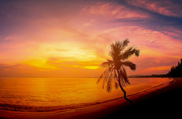 Wall Mural - Landscapes of Silhouette coconut palm trees on beach at sunset.