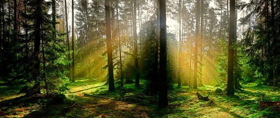 Obraz jesień w iglastym lesie - fototapety do salonu