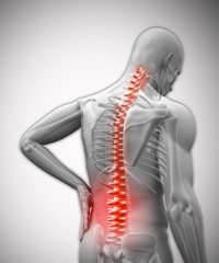 Digital human with highlighted vertebrae in pain