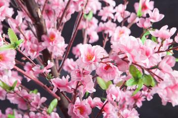 Fake Sakura tree Shot in the studio