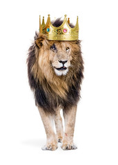 Lion With King of Jungle Crown