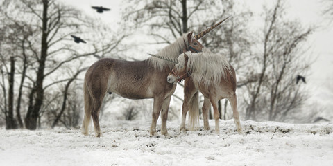 A pair of unicorns in a mystical and foggy forest in winter.
