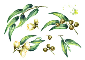 Set of eucalyptus cosmetics and medicinal plant with leaves, flowers and berries, isolated on white background. Watercolor hand drawn illustration