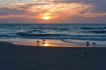 gulls on the background of the sunset, the shore of the northern sea. Netherlands, The Hague. Travels. Romance. freedom
