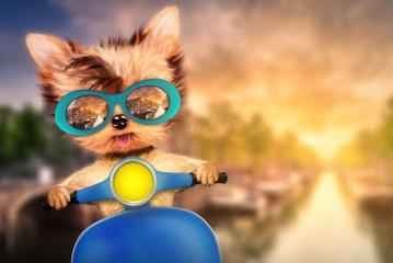 Dog on motorbike with travel background